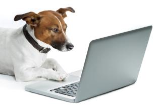 dog computer